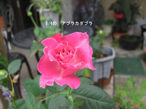f0100046_1831410.jpg
