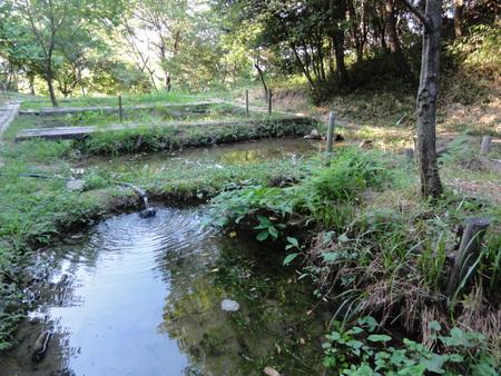 せんなん里海公園陸ガニ生態調査サポート第3回目_c0108460_0393768.jpg