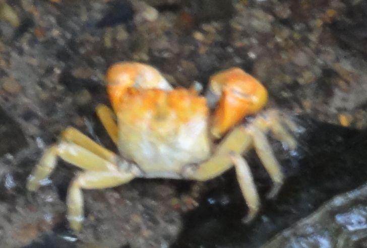 せんなん里海公園陸ガニ生態調査サポート第3回目_c0108460_041334.jpg