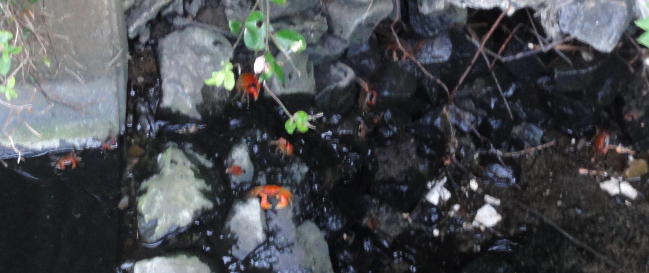 せんなん里海公園陸ガニ生態調査サポート第3回目_c0108460_046529.jpg