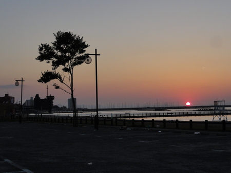 せんなん里海公園陸ガニ生態調査サポート第3回目_c0108460_0503856.jpg