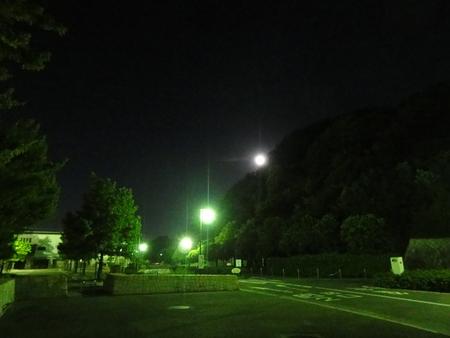 せんなん里海公園陸ガニ生態調査サポート第3回目_c0108460_0521582.jpg