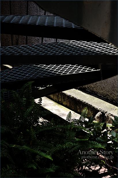stairs_a0238574_23281910.jpg