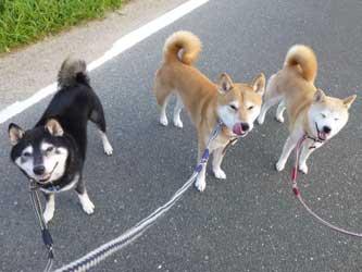犬の輪_b0057675_8392970.jpg