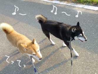 犬の輪_b0057675_8494046.jpg