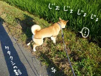 犬の輪_b0057675_915848.jpg