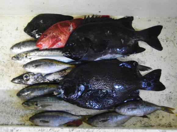 伊豆大島お魚の旅 120728~29_c0237483_1234156.jpg