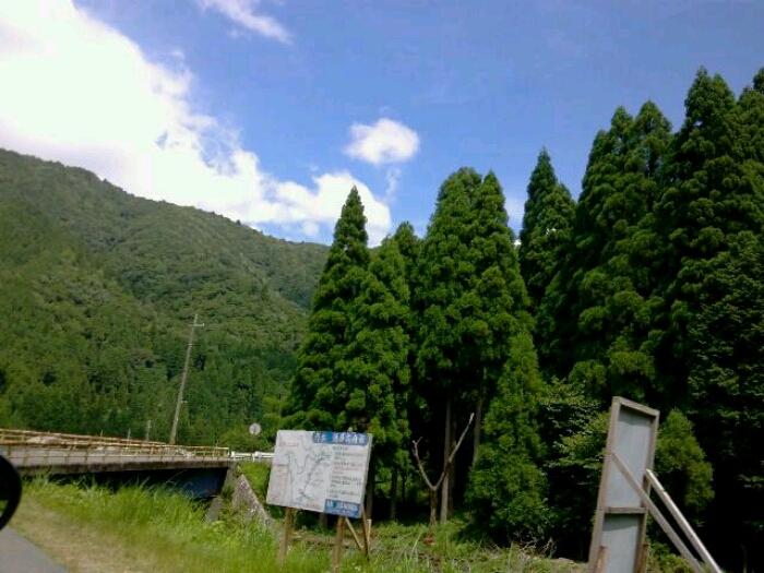 山とマタタビと_c0160822_14594378.jpg