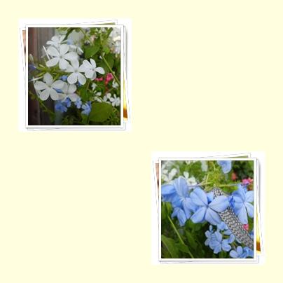 f0031546_18135421.jpg