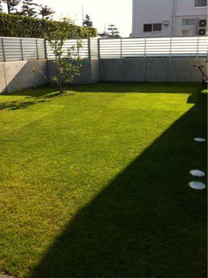 今日の芝生_e0246271_11463794.jpg