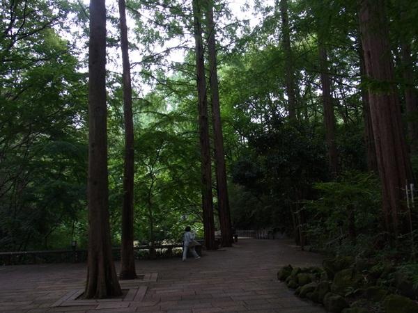 涼を求めて~岡本太郎美術館_c0237493_10303492.jpg