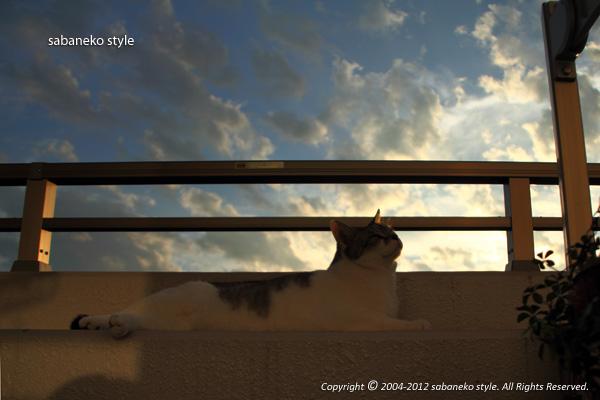 夕陽の中で_b0029706_19225371.jpg