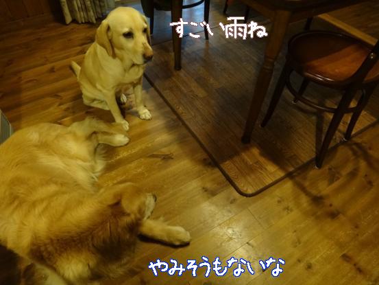 休息日_f0064906_1835629.jpg