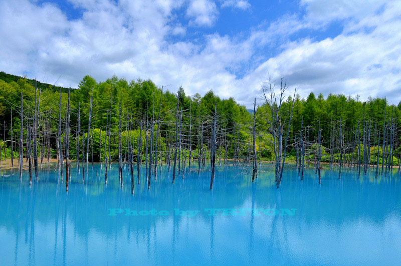 神秘の池… 青い池_c0179025_19103053.jpg