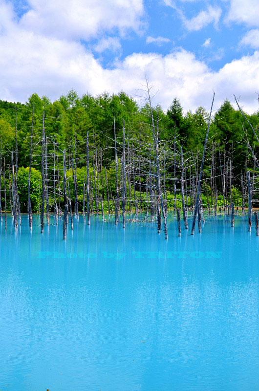 神秘の池… 青い池_c0179025_19314399.jpg