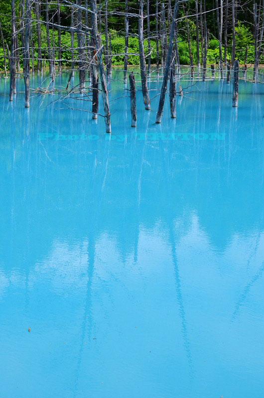 神秘の池… 青い池_c0179025_1932925.jpg