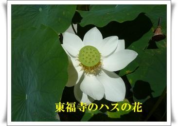 f0144631_20125895.jpg