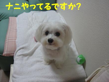 b0193480_205152.jpg