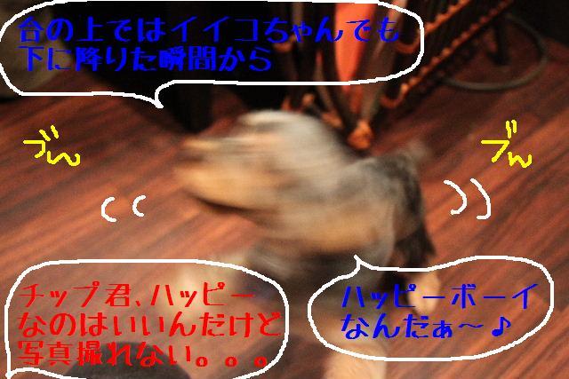 なでしこ!!_b0130018_1133514.jpg