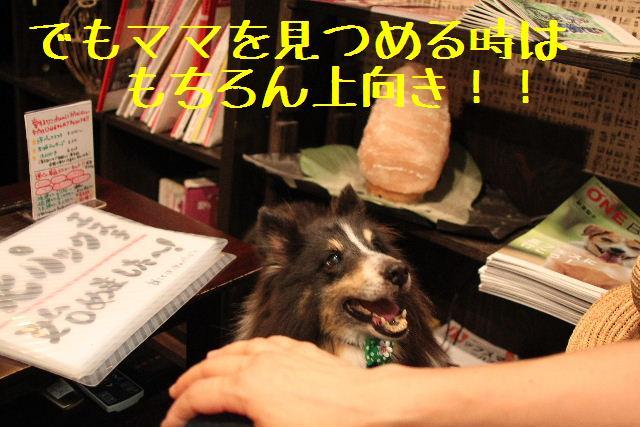 なでしこ!!_b0130018_11354157.jpg