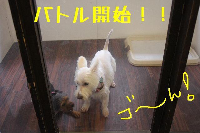 なでしこ!!_b0130018_11401966.jpg