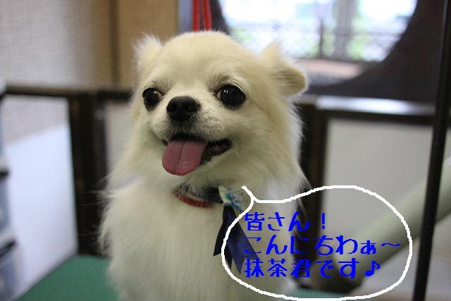 なでしこ!!_b0130018_11431461.jpg