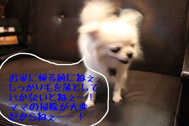なでしこ!!_b0130018_1143218.jpg