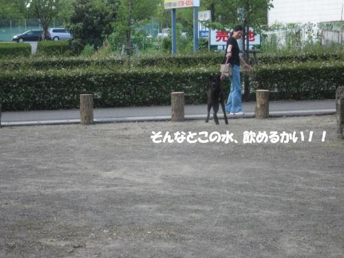 f0143123_20102867.jpg