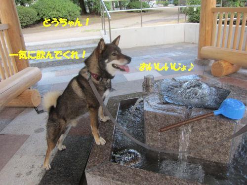 f0143123_2011599.jpg