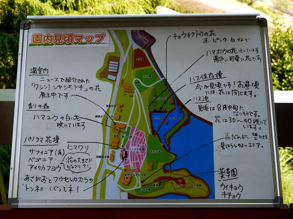 和歌山県植物公園緑花センター _b0093754_21393086.jpg