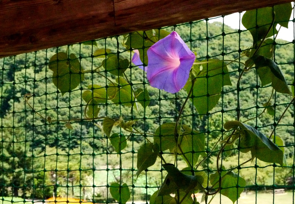 和歌山県植物公園緑花センター _b0093754_21394054.jpg