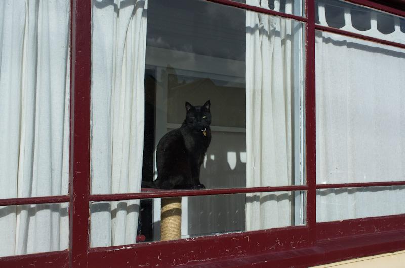 黒猫のニュートラルな視線_f0137354_19274483.jpg