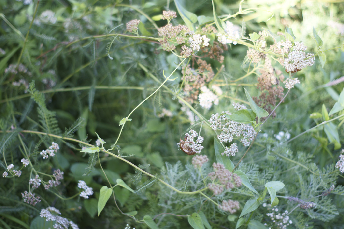 恵比寿の花、その48。_c0120903_1511463.jpg