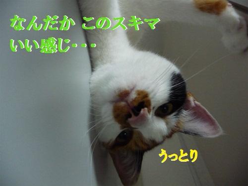 e0072606_14341178.jpg
