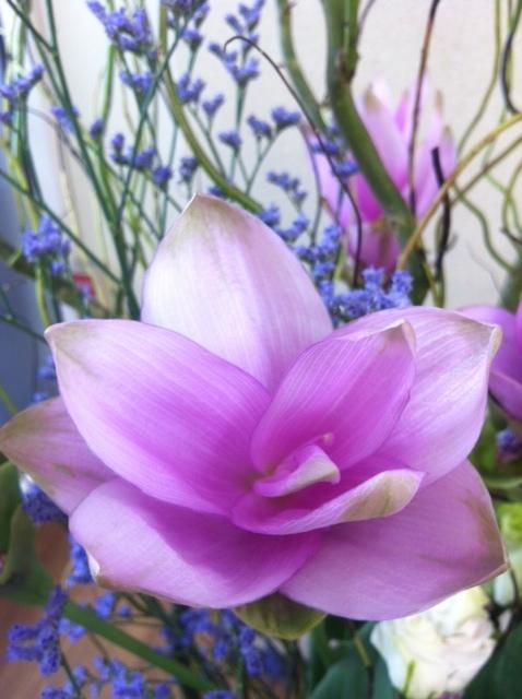 今週のお花とセール情報_a0200423_2022638.jpg