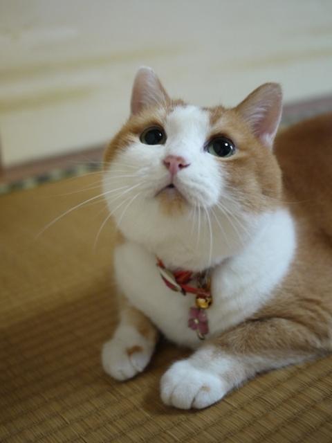 猫のお友だち ふくちゃん編。_a0143140_20474047.jpg