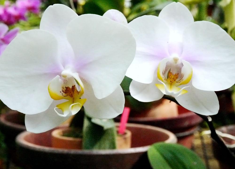 和歌山県植物公園緑花センター _b0093754_2315090.jpg