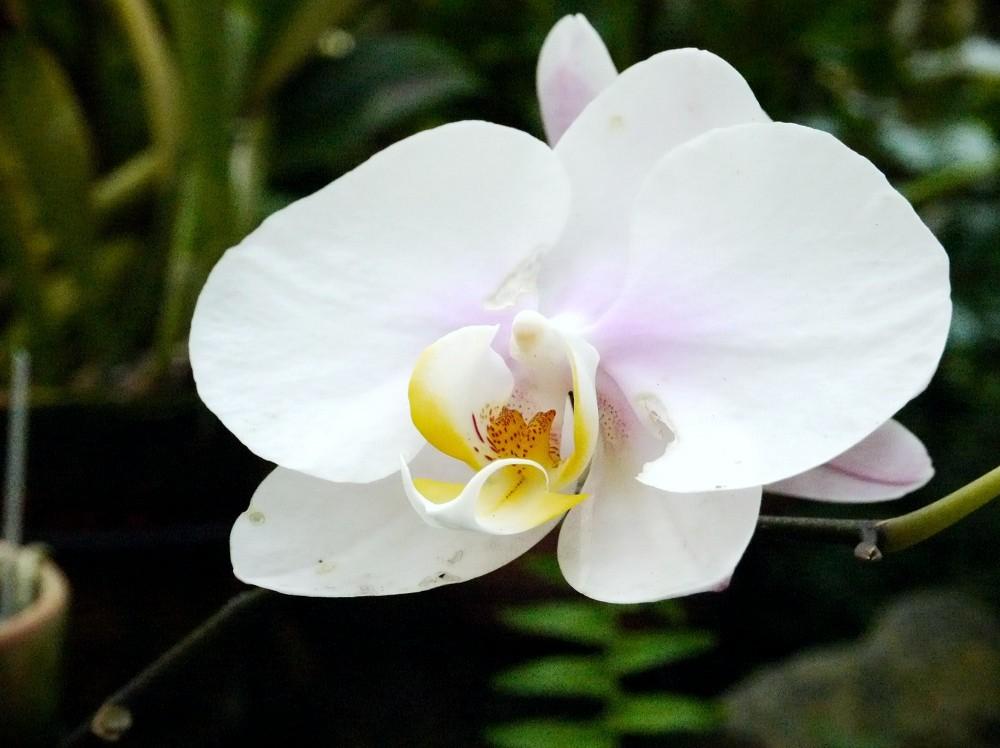 和歌山県植物公園緑花センター _b0093754_232241.jpg