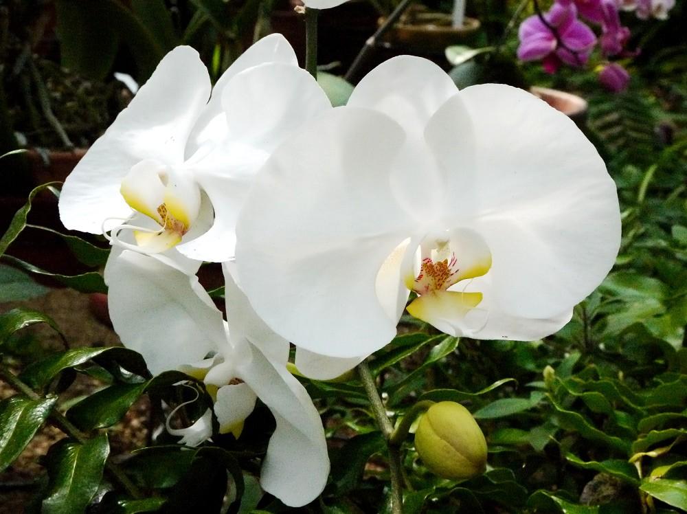 和歌山県植物公園緑花センター _b0093754_2322756.jpg