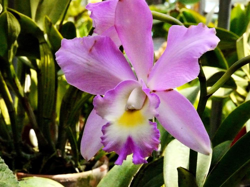 和歌山県植物公園緑花センター _b0093754_2331972.jpg
