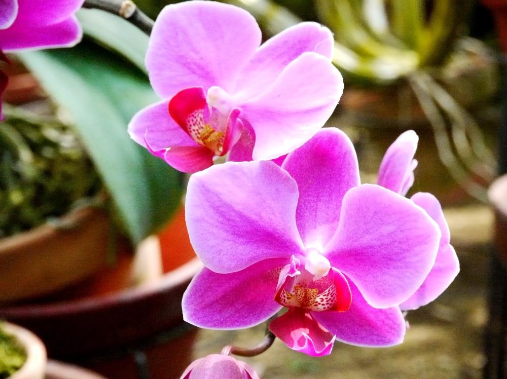 和歌山県植物公園緑花センター _b0093754_233710.jpg