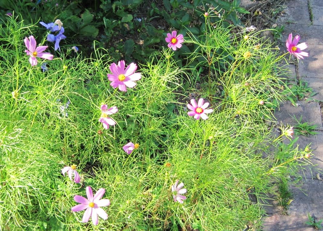 夏の軽井沢の花々/「ちゃたまや」のたまごジェラート_f0236260_21415314.jpg