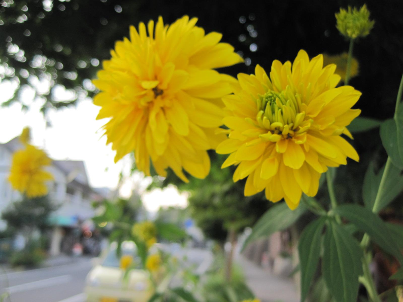 夏の軽井沢の花々/「ちゃたまや」のたまごジェラート_f0236260_21564033.jpg