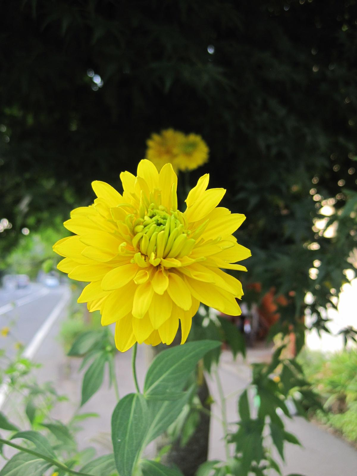 夏の軽井沢の花々/「ちゃたまや」のたまごジェラート_f0236260_23193240.jpg
