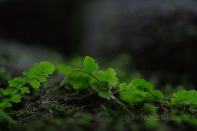 京都の夏・詩仙堂に咲く花_a0157263_20525940.jpg