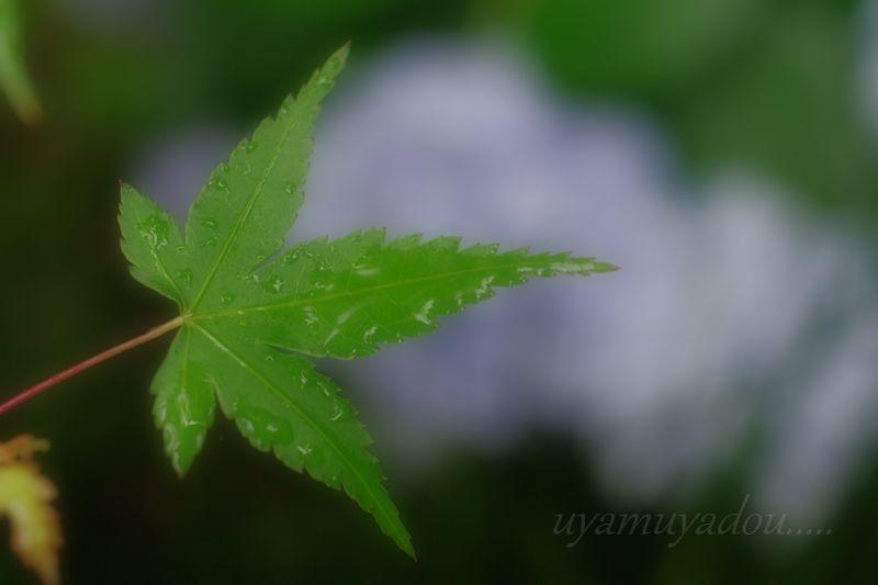 京都の夏・詩仙堂に咲く花_a0157263_2053826.jpg