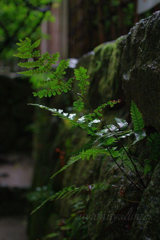 京都の夏・詩仙堂に咲く花_a0157263_20544895.jpg