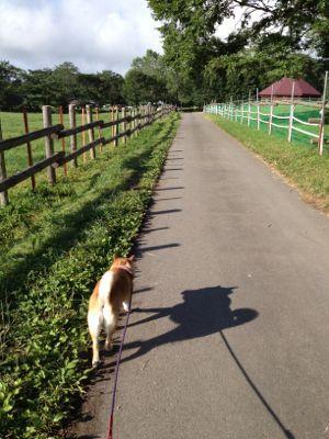 散歩_a0126590_821993.jpg
