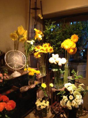 大好きな青山のお花屋さんヾ(@⌒ー⌒@)ノ_a0213806_1762527.jpg