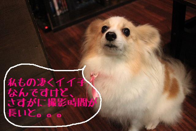 募集でぇ~~~す!!_b0130018_0103788.jpg